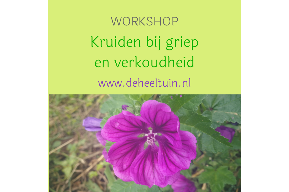 Workshop Kruiden griep en verkoudheid